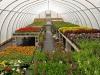 Garden Shack Farm