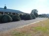 Don's Tree Farm - Off Season Call Ahead