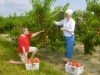 Bennett Orchards