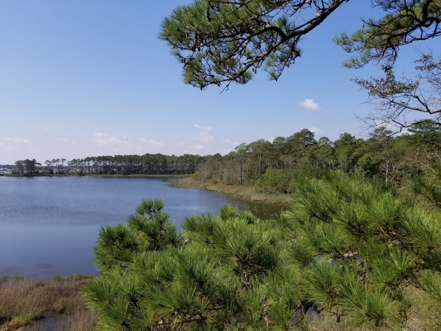 Assawoman Wildlife Area