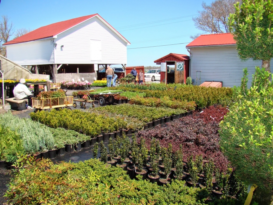 Jeff's Green Houses & Gift Shop