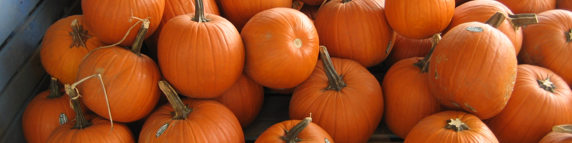 Fall Fun in Southern Delaware!