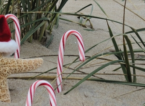 Online Holiday Shopping in Southern Delaware!